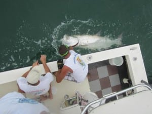 Tarpon Springs Fishing