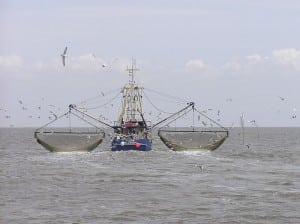 Tampa and Tarpon Springs Fishing