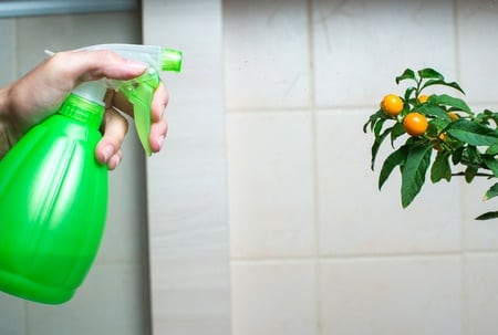 Making Your Own Homemade Pest Control Products